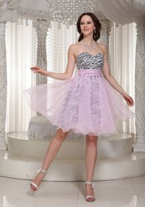 Organza and Zebra Sweetheart 5th Grade Graduation Dresses in Kinston